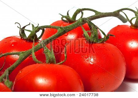 Tomato Branch Closeup