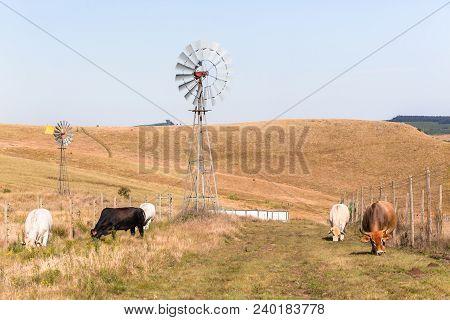 Cattle Farming Landscape