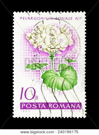 Romania - Circa 1968 : Cancelled Postage Stamp Printed By Romania, That Shows Garden Geranium.