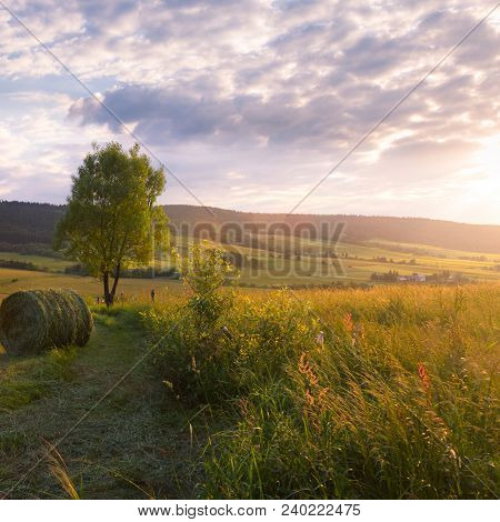Summer Sunset Meadow, Clouds And Tree Landscape
