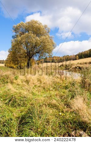 Autumn Alone Tree On The Meadow Landscape