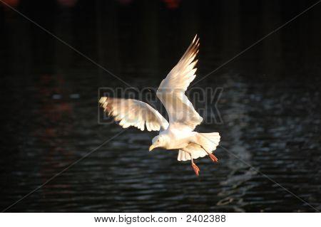 Flight Over Dart