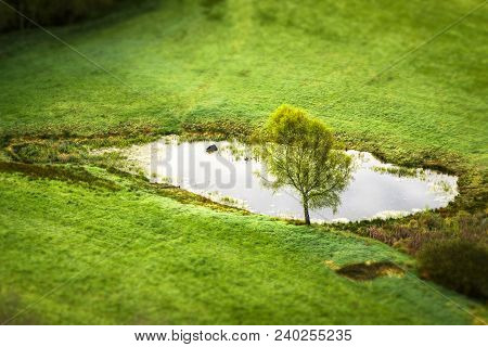 Lonely Tree By A Small Pond On A Green Rural Field In The Spring Seen From Above