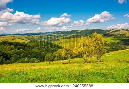 Row Trees A Hillside In Autumn. Lovely Countryside Scenery In Mountains Under The Blue Sky With Fluf