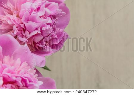 Flowers Of Pink Peonies On Mother's Day, Close-up