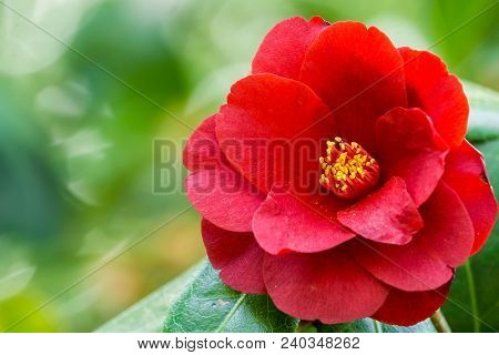 Close-up of a beautiful Red Flower in Springtime. View to a beautiful bloom ing Flower in Spring. Season of blooming Spring Flowers. Flowers and Nature Backgrounds.
