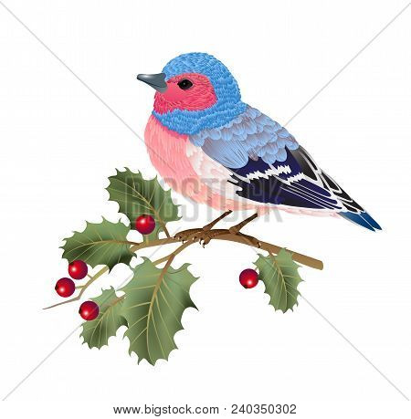 Finch Bird Sitting On Holly Twig. Design Element. For Banners, Posters, Leaflets And Brochures.