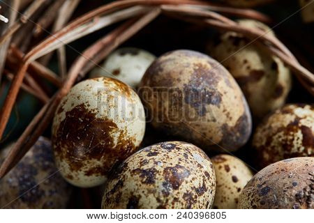 Conceptual Still-life With Fresh Raw Spotted Quail Eggs In Hay Nest Over Blue Textured Background, C