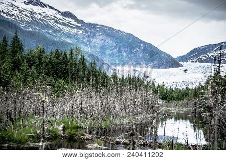 Panoramic View Of Mendenhall Glacier Juneau Alaska