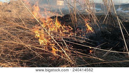 Flames Of The Tongue Of The Fire Dry Grass In The Daytime.