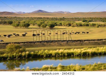 Autumn Grassland View
