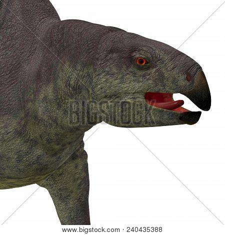 Lotosaurus Dinosaur Head 3d Illustration - Lotosaurus Adentis Was A Herbivorous Poposauroid Dinosaur