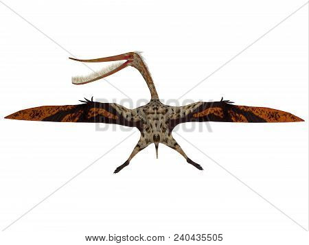 Pterodaustro Reptile In Flight 3d Illustration - Pterodaustro Guinazui Was A Carnivorous Flying Rept