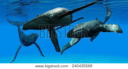 Three Humpback Whales 3d Illustration - A Male Bull Humpback Whale Takes Interest In A Female As Her