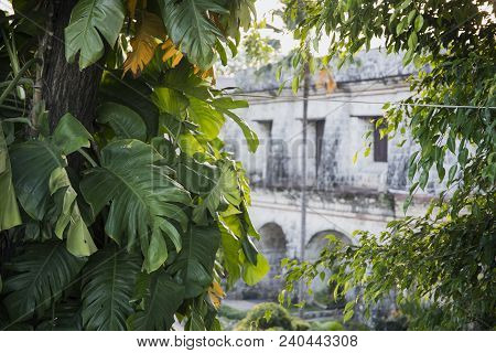 Old Historic House View Through Tropical Plants. Fort San Pedro View Through Green Plant. Oldest His