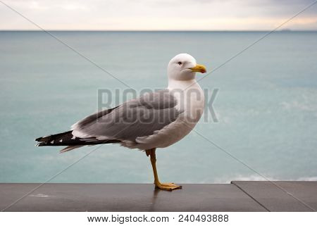 Seagull On A Marble Parapet And With Leaden Sky As Background