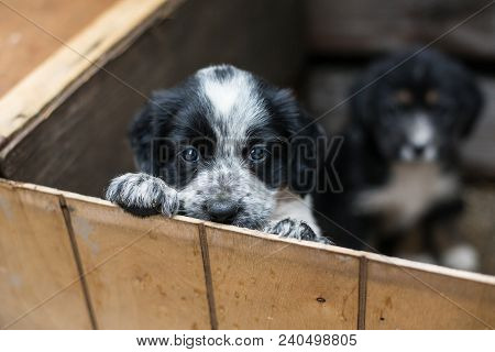 Cute Little Puppy In A Wooden Box Is Asking To Be Adopted With Hope. Homeless Dog