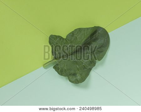 Fresh Green Leaf Of Spinach On A Background Of Similar (analogous Colors) Shades Of Green. Two Tone