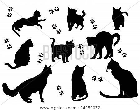 Cats silhouettes on white