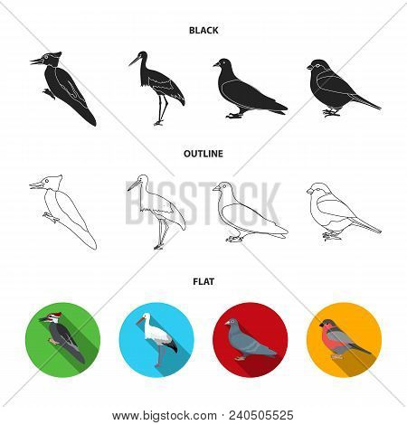 Woodpecker, Stork And Others. Birds Set Collection Icons In Black, Flat, Outline Style Vector Symbol