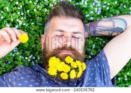 Guy With Dandelions In Beard Relaxing, Top View. Bearded Man With Dandelion Flowers In Beard Lay On