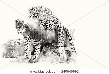 Leopard Resting On A Fallen Tree Log To Rest After Hunting Artistic Conversion