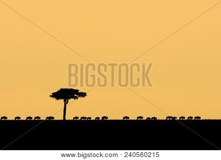 A Line Of Wildebeest At Sunset In Masai Mara Game Reserve, Kenya