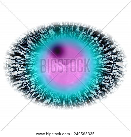 Isolated Elliptic Animal Blue Eye In Rtg Picture. The Eye With Large Pupil And Bright Retina. Shinni