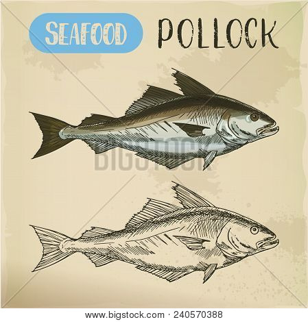 Signboard With Pollock Sketch Side View. Atlantic And European Lythe Or Coalfish Sign For Restaurant