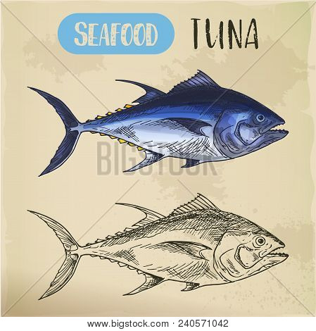 Sketch Of Bluefin Or Bullet Tuna, Hand Drawn Seafood For Trophy Room. Underwater River Lanimal. Fish