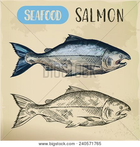 Signboard With Sketch Of Salmon Fish Or Pacific Ocean Gorbuscha. Hand Drawn Seafood For Restaurant M