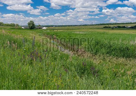Summer Landscape Depicting Small River Sura Overgrown With Cane And Wild Grasses, Central Ukraine