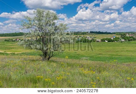June Landscape With Lonely Silverberry Tree On A Hill Near Novo-aleksandrivka Village, Central Ukrai