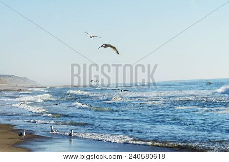 Seagulls Fishing On The Beach In Denmark