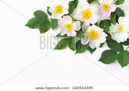 Styled Stock Photo. Spring Floral Composition. Decorative Cornenr, Banner Made Of Beautiful White An