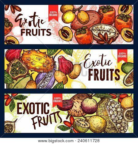 Exotic Fruit And Tropical Berry Sketch Banner Set. Fresh Persimmon, Kiwano And Granadilla, Jackfruit