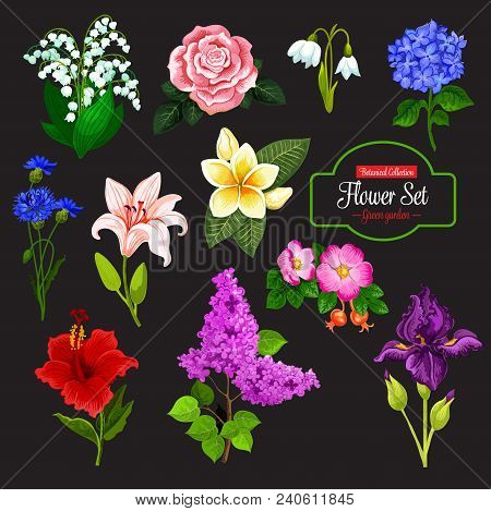 Spring Flower Cartoon Icon Set Of Wild Flowering Plant And Tropical Hawaiian Flower. Rose, Lily And