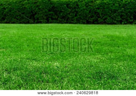 Green Grass Texture Background, Colorful Freshness Grass