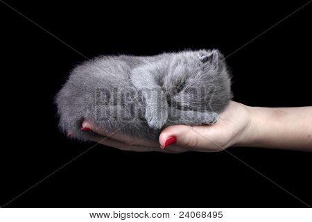 Little Kitten In The Hand