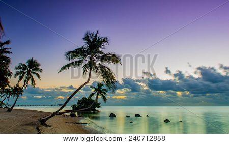 Wild Palms, The Moorings Beach, Islamorada Florida