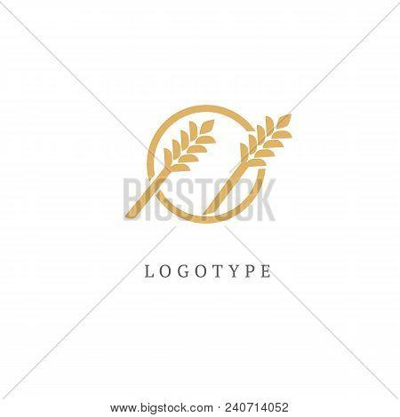 Illustration Design Of Elegant, Premium And Royal Logotype Leaf . Vector Icon Of Gold Ear.