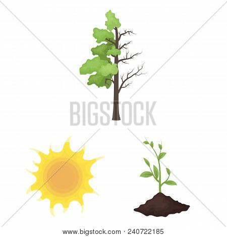 Bio And Ecology Cartoon Icons In Set Collection For Design. An Ecologically Pure Product Vector Symb