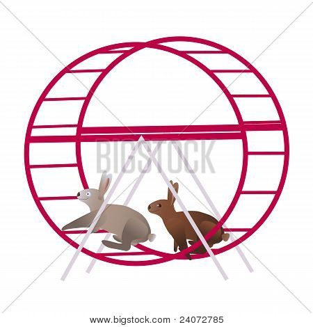Rabbits in the running wheel