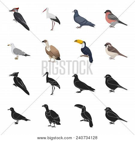 Gull, Toucan And Other Species. Birds Set Collection Icons In Black, Cartoon Style Vector Symbol Sto