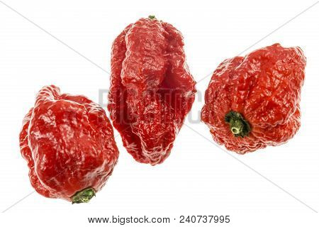 The Carolina Reaper Is A Medium Sized Chili Pepper Of The Species Capsicum Chinense, Red And Gnarled
