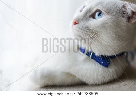 Cute white kitten head shot