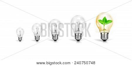 Light Bulb With One Growth Of Plant Inside On White Background , Green Growth Success Of Business Cr