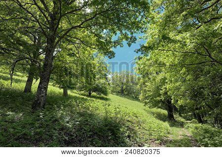 Malabotta Woods vernal view, Sicily