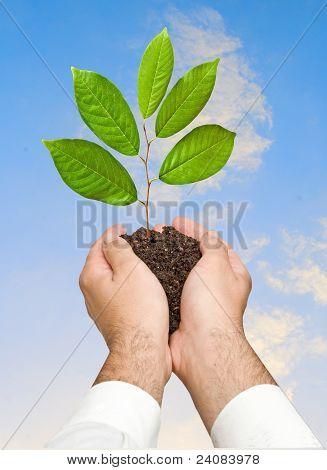 Pimpollo en manos