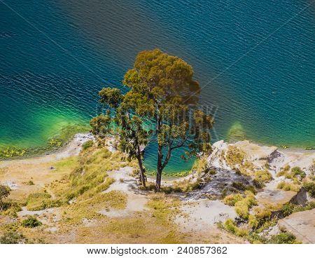 Detail Of Amazing Tree Along Quilotoa Lagoon Shoreline, Volcanic Crater Lake In Ecuador